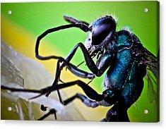Blue Wasp On Fruit Acrylic Print by Ryan Kelly