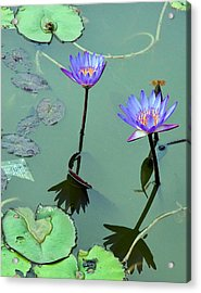 Blue Water Lilies Acrylic Print