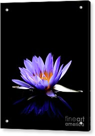 Blue Water Lily . 7d5714 Acrylic Print by Wingsdomain Art and Photography