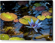 Blue Water Lily Pond Acrylic Print