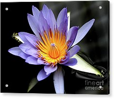 Blue Water Lily Pond Flower . 7d5726 Acrylic Print by Wingsdomain Art and Photography