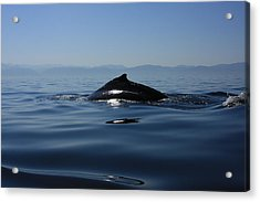 Acrylic Print featuring the photograph Blue Waters by Nicola Fiscarelli