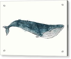 Blue Whale From Whales Chart Acrylic Print by Amy Hamilton