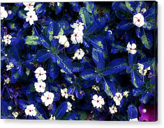 Blue White I Acrylic Print