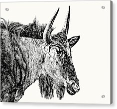 Blue Wildebeest Close-up Acrylic Print