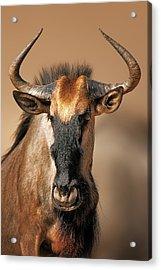 Blue Wildebeest Portrait Acrylic Print