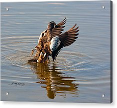 Blue Winged Teal 2 Acrylic Print