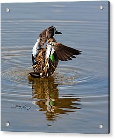 Blue Winged Teal 4 Acrylic Print