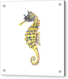 Blue Yellow Seahorse - Square Acrylic Print by Amy Kirkpatrick