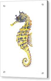Blue Yellow Seahorse - Vertical Acrylic Print by Amy Kirkpatrick