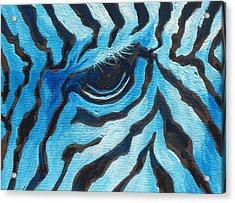 Blue Zebra Acrylic Print