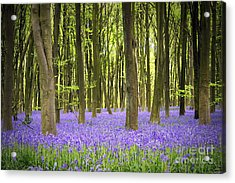 Bluebell Carpet Acrylic Print by Jane Rix