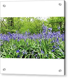 #bluebell #flowers #spring  #woodland Acrylic Print by Natalie Anne