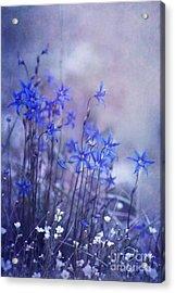 Bluebell Heaven Acrylic Print by Priska Wettstein