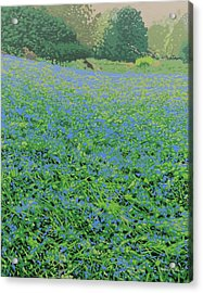 Bluebell Hill Acrylic Print by Malcolm Warrilow