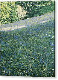 Bluebell Knoll Acrylic Print by Malcolm Warrilow