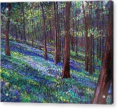 Bluebell Woods Acrylic Print by Li Newton