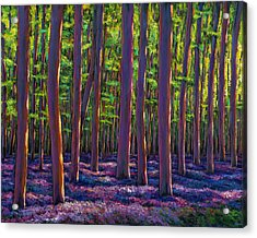 Bluebells And Forest Acrylic Print by Johnathan Harris