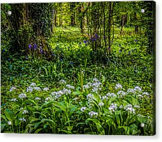 Bluebells And Wild Garlic At Coole Park Acrylic Print