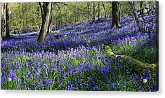 Acrylic Print featuring the digital art Bluebells by Julian Perry