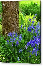 Acrylic Print featuring the photograph Bluebells Of Springtime  by Connie Handscomb