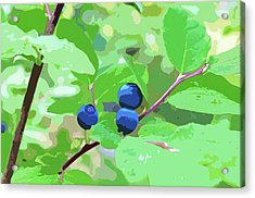 Blueberries Halftone Acrylic Print by Cathy Mahnke