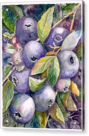 Blueberries Acrylic Print by KC Winters