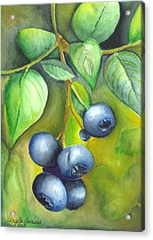 Blueberrries Acrylic Print