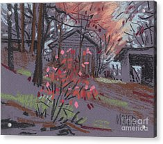 Blueberry Bush In Fall Acrylic Print by Donald Maier