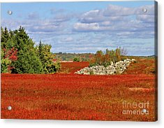 Acrylic Print featuring the photograph Blueberry Field by Debbie Stahre