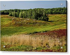 Blueberry Fields Forever Acrylic Print by Brent L Ander