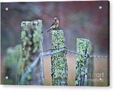 Acrylic Print featuring the photograph Bluebird 040517 by Douglas Stucky