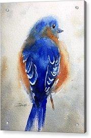 Bluebird #1 Acrylic Print