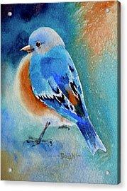 Bluebird #4 Acrylic Print