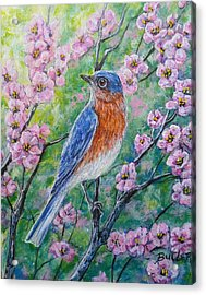 Bluebird And Blossoms Acrylic Print by Gail Butler