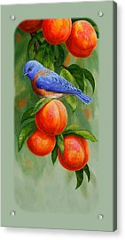 Bluebird And Peaches Iphone Case Acrylic Print