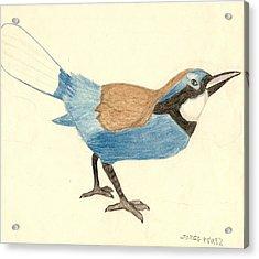 Bluebird Acrylic Print by George I Perez