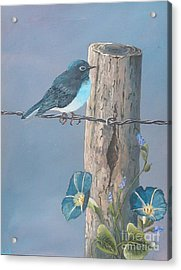 Bluebird Acrylic Print by John Wise