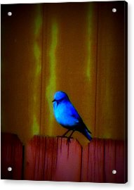 Acrylic Print featuring the photograph Bluebird Of Happiness by Karen Shackles