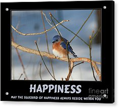 Bluebird Of Happiness Acrylic Print by Smilin Eyes  Treasures