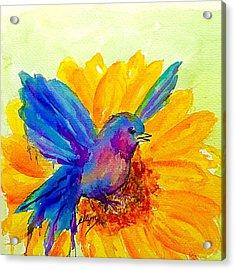 Bluebird On Sunflower  Acrylic Print
