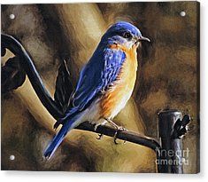 Bluebird Portrait Acrylic Print by Sue Melvin