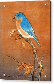 Bluebird Acrylic Print by Sharon Farber