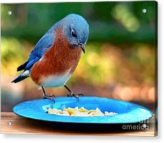 Acrylic Print featuring the photograph Bluebird's Dinner by Sue Melvin