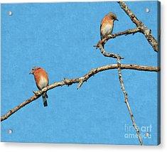 Bluebirds On A Crazy Limb Acrylic Print