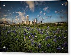 Bluebonnet City Acrylic Print