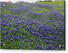 Acrylic Print featuring the photograph Bluebonnet Field by Robyn Stacey