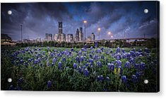 Bluebonnet Houston Acrylic Print
