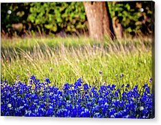 Bluebonnet Layers Acrylic Print by Linda Unger