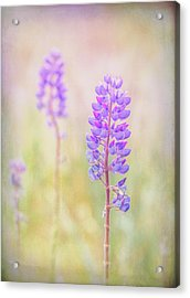 Acrylic Print featuring the photograph Bluebonnet by Russell Styles